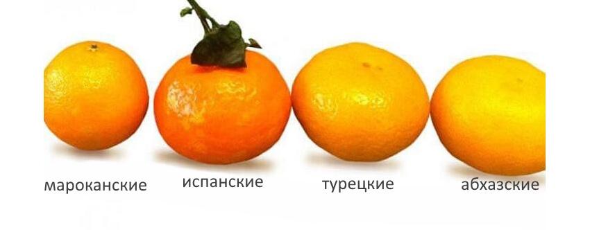 Сорта мандаринов - фото