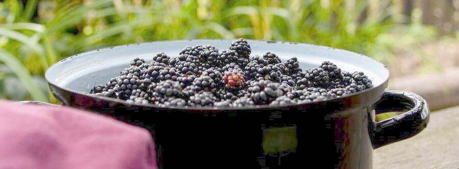 Чем полезна ягода ежевика для организма женщины