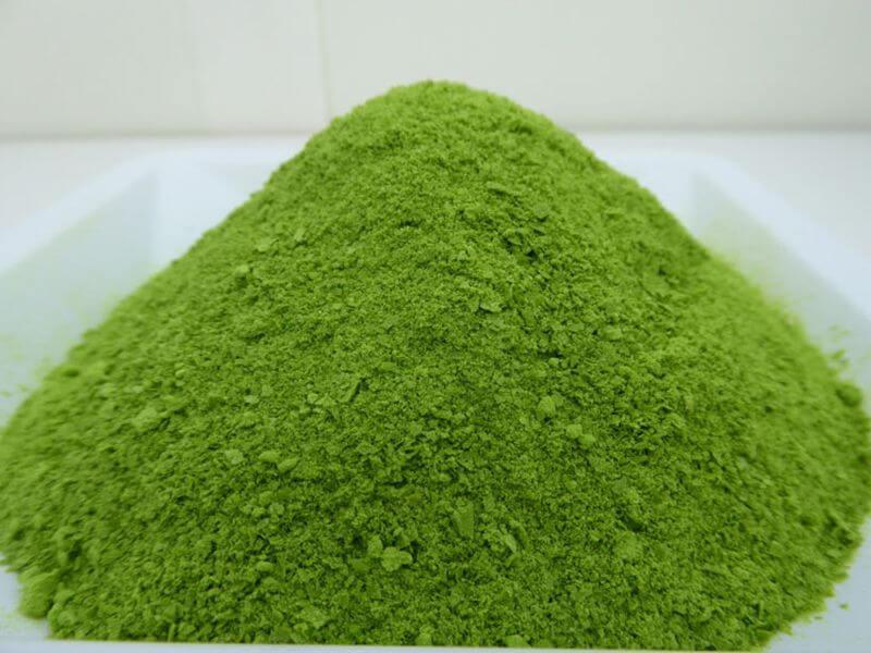 Водоросль хлорелла полезные свойства и применение для людей